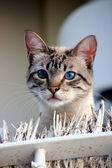 Kot na balkonie1 — Stock Photo