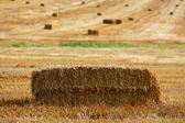 Palheiro no campo — Foto Stock