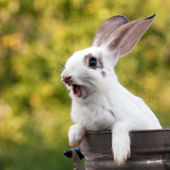 Rabbit. — Stock Photo