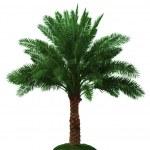 palmier — Photo #8599006