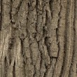 Texture of wood. — Stock Photo