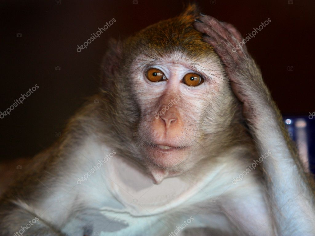 Thoughtful Monkey. — Stock Photo #8600378