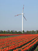 Wind as an alternate energy resource — Stockfoto