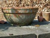 Starej terakoty doniczka — Zdjęcie stockowe