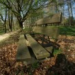 Bench in forrest — Foto de stock #9102194