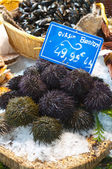Fresh sea urchins on ice in French market — Stock Photo
