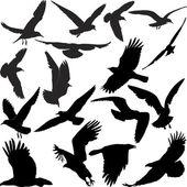 Raven hawk eagle gulls crow — Stock Vector
