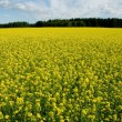 Landscape with rape field — Stock Photo
