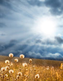 Sun rays make the way through clouds on a glade — Stock Photo