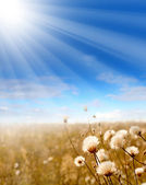 The glade with native-grasses is warmed by sun beams — Stock Photo