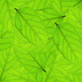 Fresh green leaves border background — Stock Photo