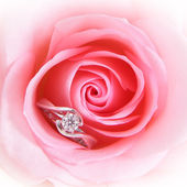 Romantic Pink Rose with diamond wedding ring — Stock Photo
