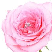 Anneaux de mariage romantique sur une fleur rose rose — Photo