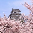 Japanese castle and Beautiful pink cherry blossom - Stock Photo