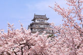 Japanese castle and Beautiful pink cherry blossom — Stock Photo