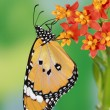 Splendid and beautiful butterfly - Stock Photo