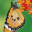 Splendid and beautiful butterfly — Stock Photo