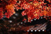 Beautiful maple — Stockfoto