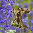 Royalty-Free Stock Photo: Love of butterfly with green and blue background in the park
