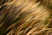 Yellow grass in the wind — Stock Photo