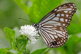 Beautiful butterfly with white flower — Foto de Stock