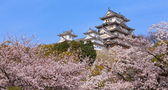 Japanese castle and Beautiful flower — Stock Photo