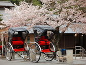 Japan ricksha with cherry blossoms tree — Stock Photo