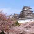 Japanese castle and Beautiful pink cherry blossom shot in japan - Stock Photo