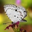 White butterfly — Stock Photo #8723028