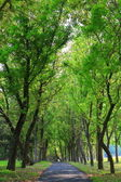 Green tree and road — Stock Photo