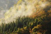 Amazing morning mist in the forest and mountain — Stock Photo