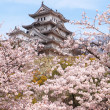 Japan castle with pink cherry blossoms flower - Stock Photo