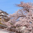 Pink cherry blossoms flower with Japan castle - Stock Photo