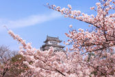 Japan castle with pink cherry blossoms flower — Stockfoto