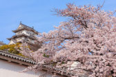 Pink cherry blossoms flower with Japan castle — Stock Photo