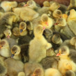 ducklings — Stock Photo #8777230