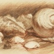 Seashells art drawing — Stockfoto