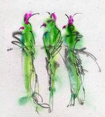 Papoušci na větvi — Stock fotografie