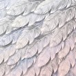 Seamless background of white feathers, close up — Stockvektor