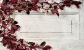 Choke cherry branches on vintage door — Stock Photo