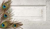 Pawich piór na wzór drzwi — Zdjęcie stockowe