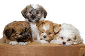 Four puppies on a wood plank — Stock Photo