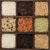 Rice nine varieties in a printers box — Stock Photo