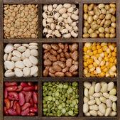 小豆在打印机框背景九个品种 — 图库照片