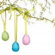 Easter eggs hanging from a branch — Stock Photo #9877123