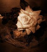 Retro still life - rosa y símbolo del corazón — Foto de Stock