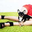 Pretty little funny puppy sitting over beautiful long woman feet — Stock Photo
