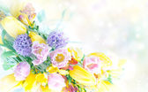 Beautiful spring flowers nature frame — Stock Photo