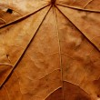 Stock Photo: Faded leaf veins