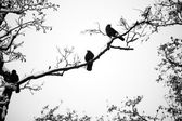 Birds silhouette on bared tree branch — Stock Photo